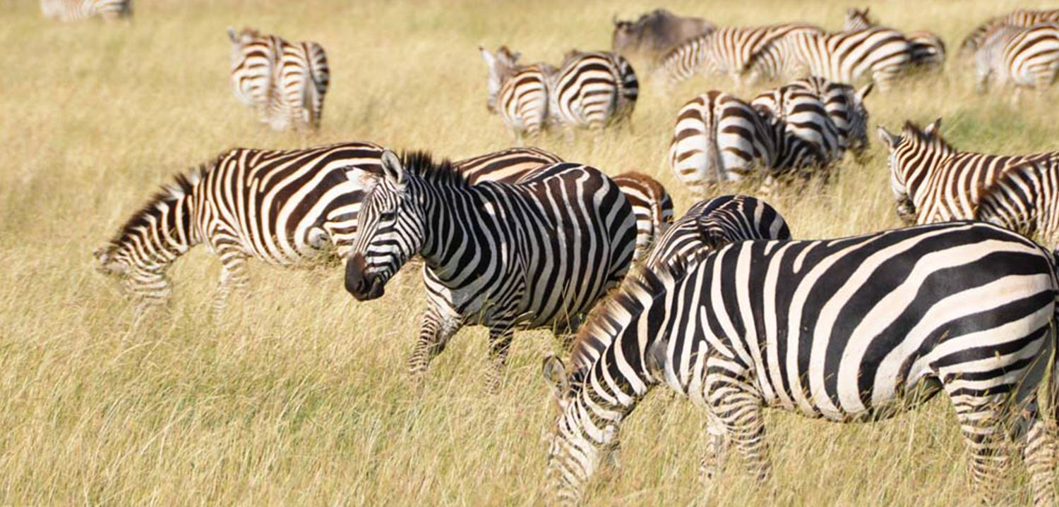 TANZANIA NORTHERN SAFARIS