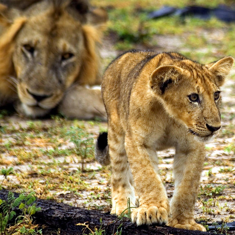 TANZANIA SOUTHERN SAFARIS