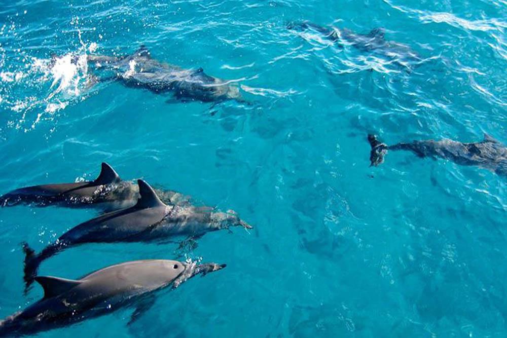 Kizimkazi Dolphin Tour in Zanzibar